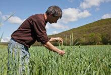 Confinement : adoptons une alimentation durable et solidaire