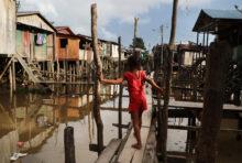 Brésil : la déforestation, l'autre épidémie