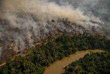 UE : halte à la déforestation importée !