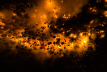 Urgence climatique : incendies dans les forêts de Russie