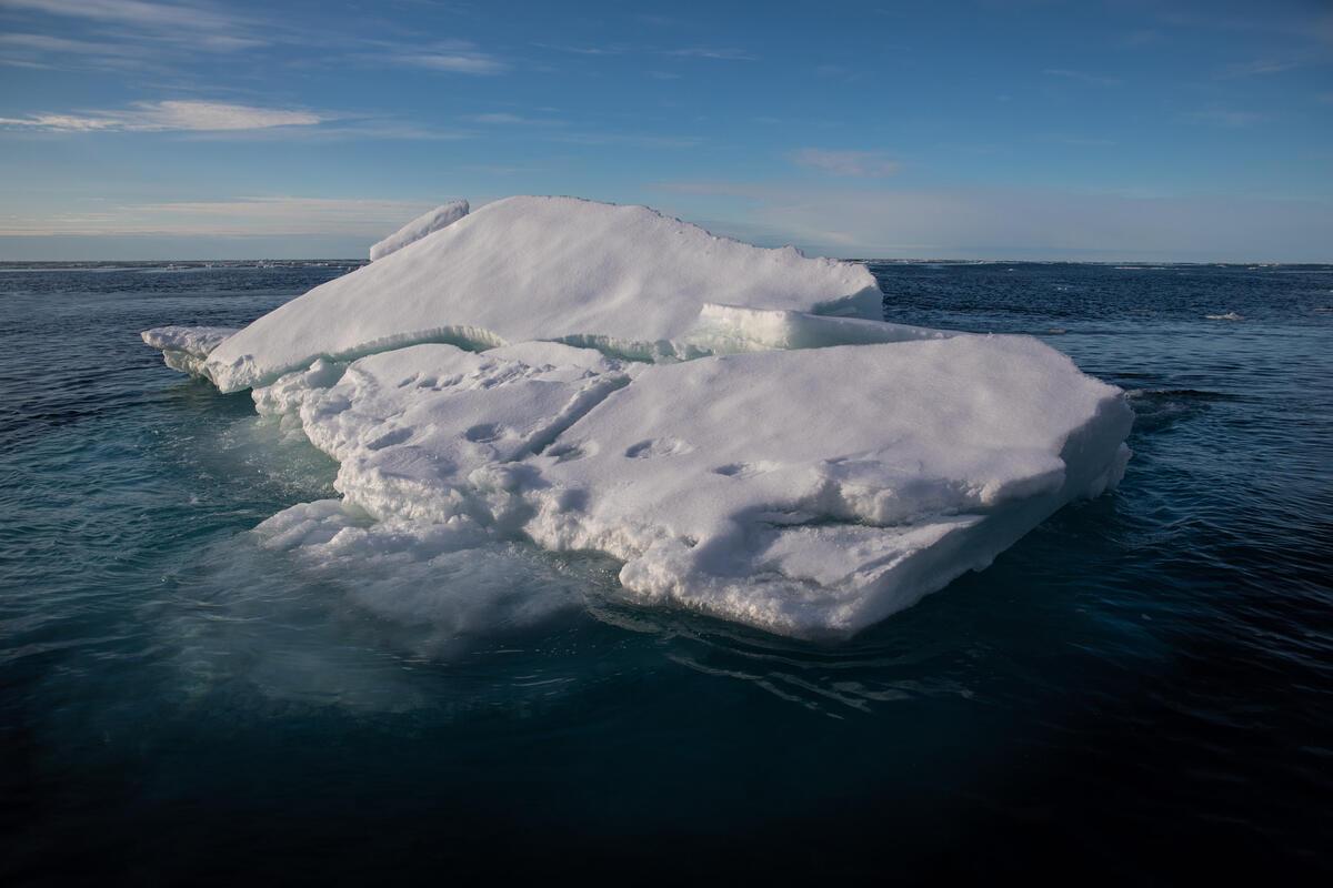 Polar Bear Prints on Ice in the Arctic Sea. © Daniella Zalcman