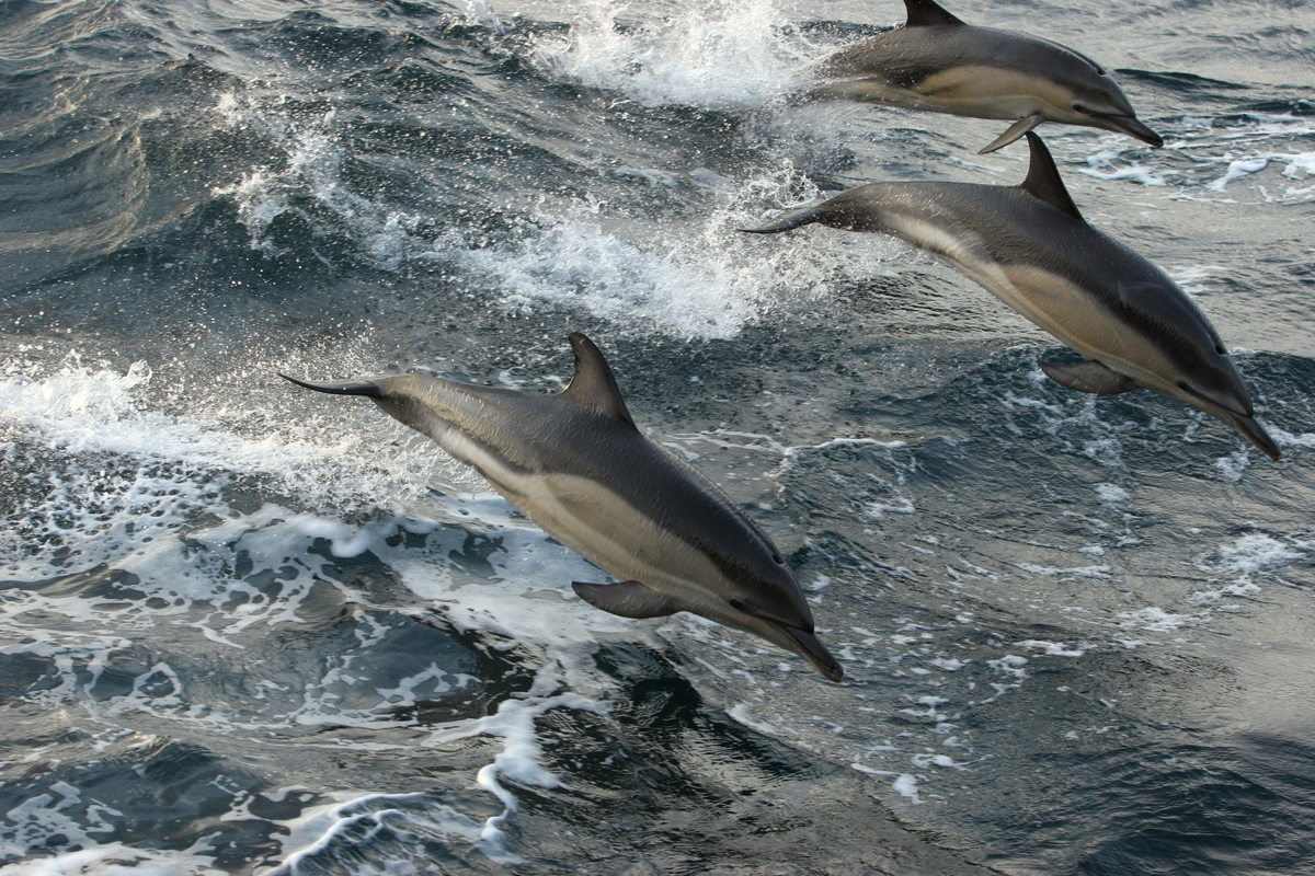 Dolphin Bycatch Tour in English Channel. © Kate Davison