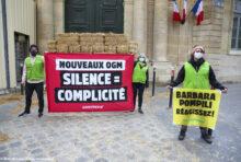 Nouveaux OGM : le silence complice du gouvernement