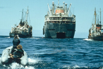 Russian Whaling Fleet in North Pacific