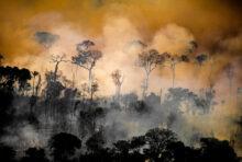 3 raisons d'agir contre la déforestation en Amazonie